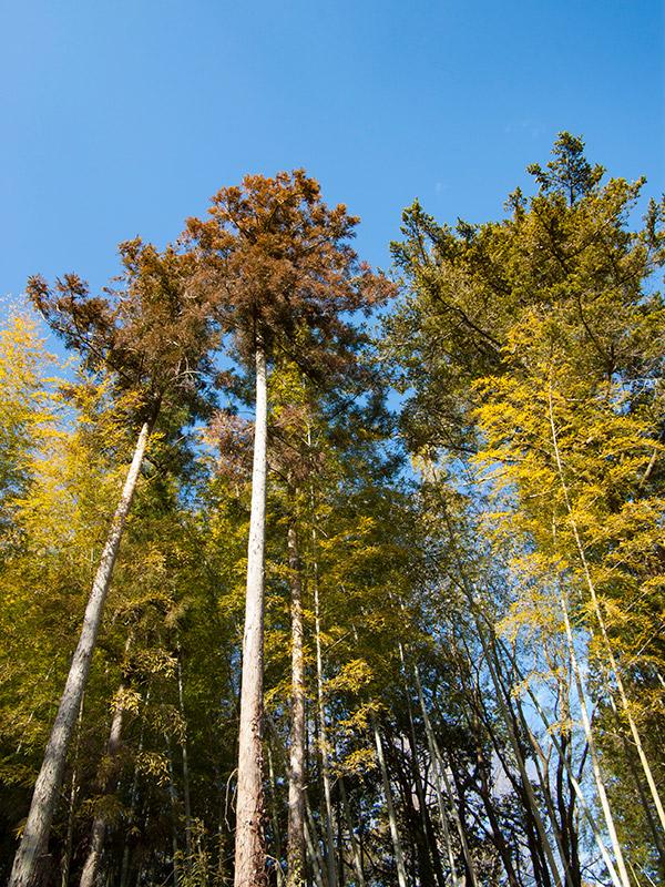 高く伸びた木々