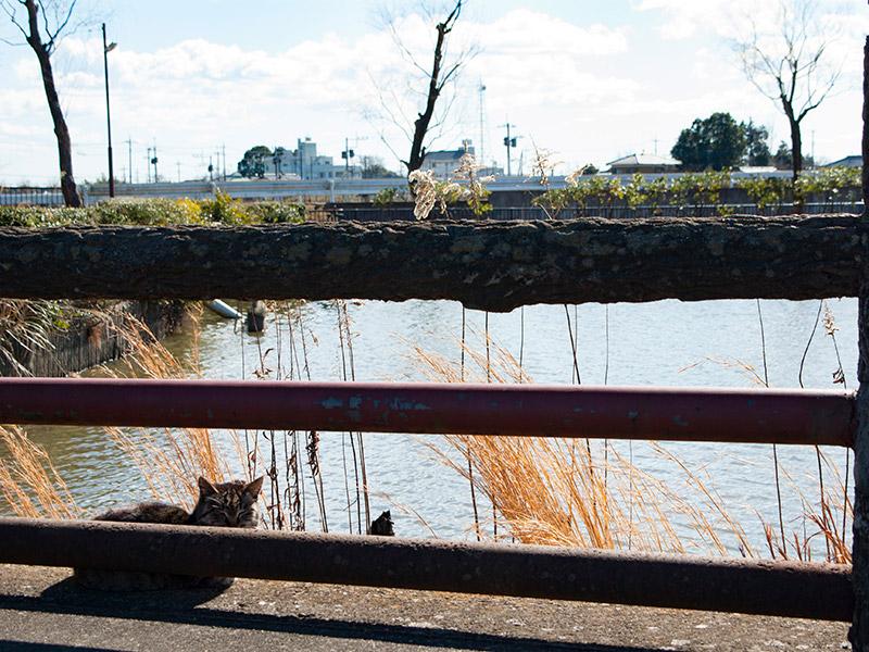 池の畔でひなたぼっこする猫