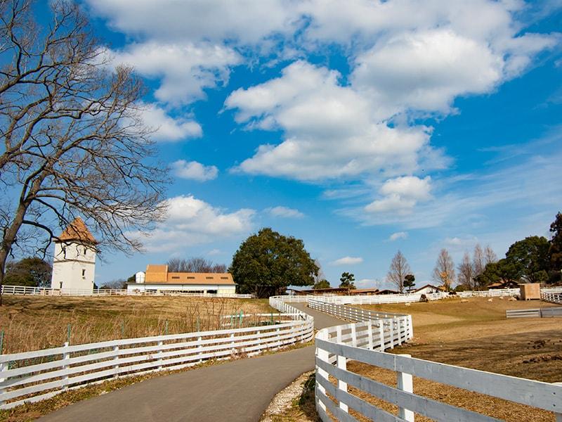 西欧風の牧場の風景