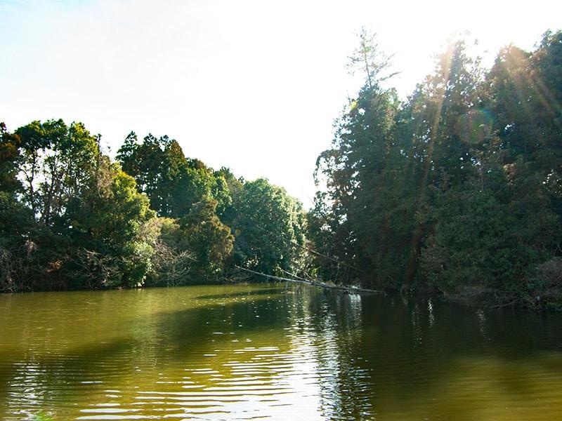 緑色の水面