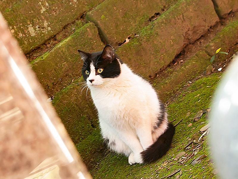大杉神社内の猫1