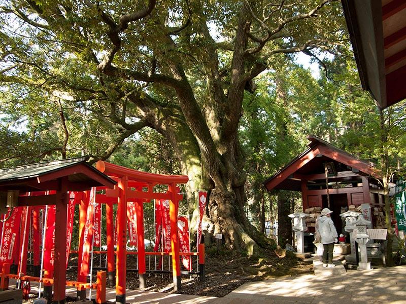 勝馬神社とスダジイ