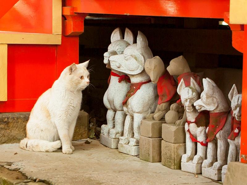 大杉神社内の猫2