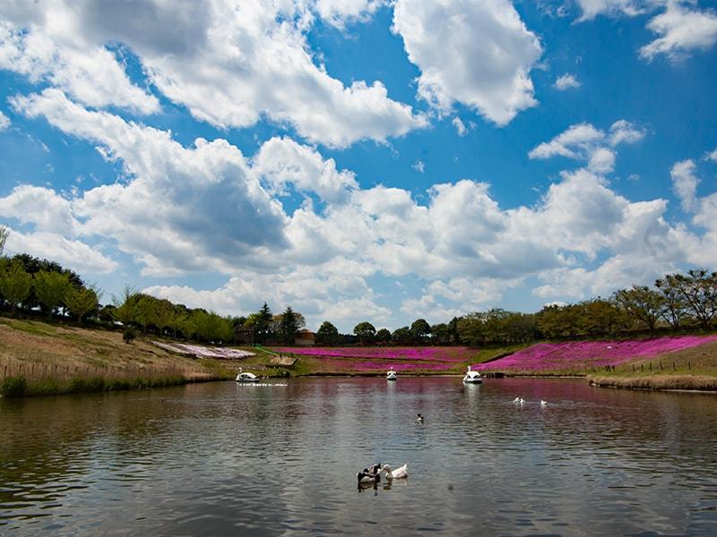 園内の大きな池
