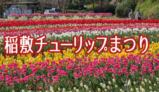 和田公園の稲敷チューリップまつりとイバライド(稲敷市)