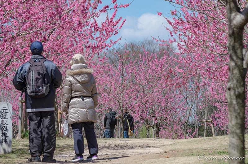 鮮やかな桃林
