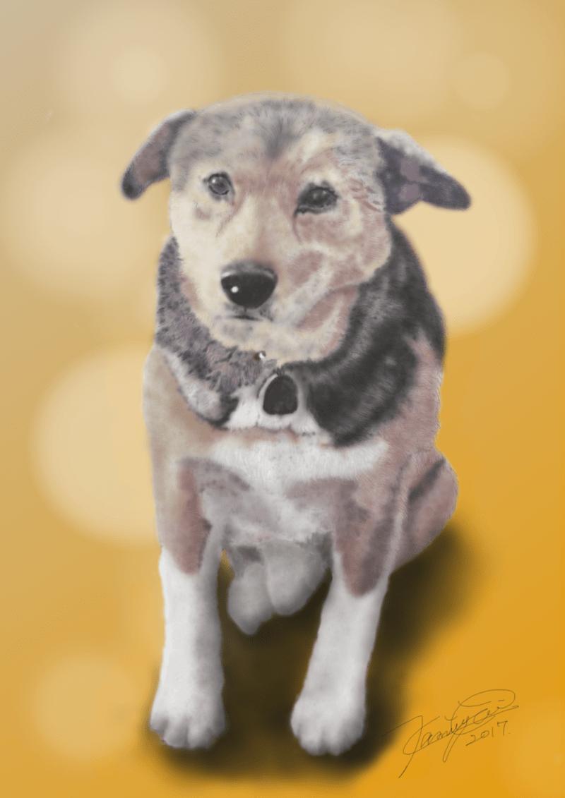 忠犬タロー
