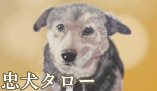 忠犬タローものがたり〜みんなのタロー像除幕式(石岡市)
