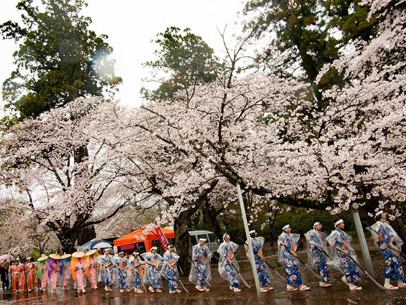 桜と千姫さま行列