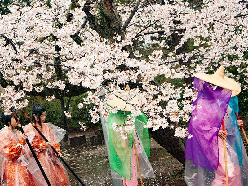 桜と千姫行列