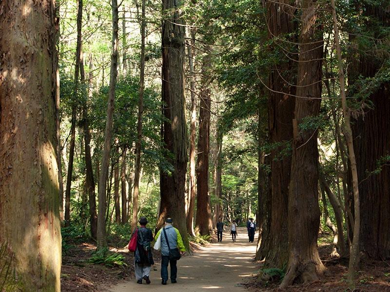巨木に囲まれた神宮の敷地