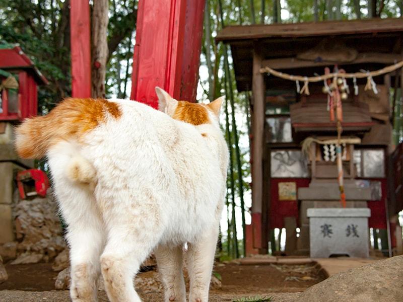 案内する猫の後ろ姿