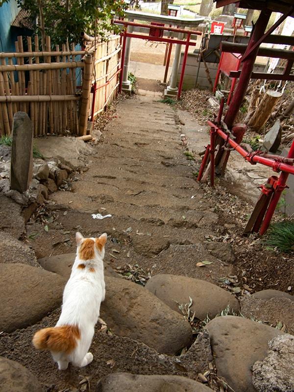 富士山浅間神社の猫2