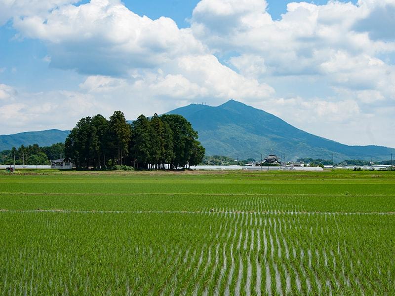 晴明橋公園から見る筑波山