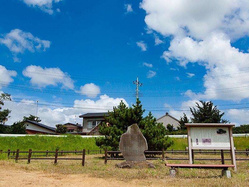 3代目高須の一本松(夏)