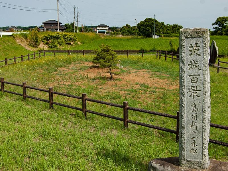 高須崎の一本松(3本)と石碑
