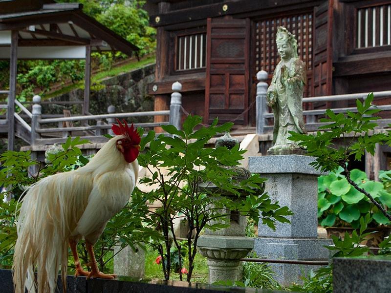 雨引観音仏像と鶏