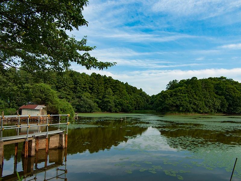 夏の宍塚大池