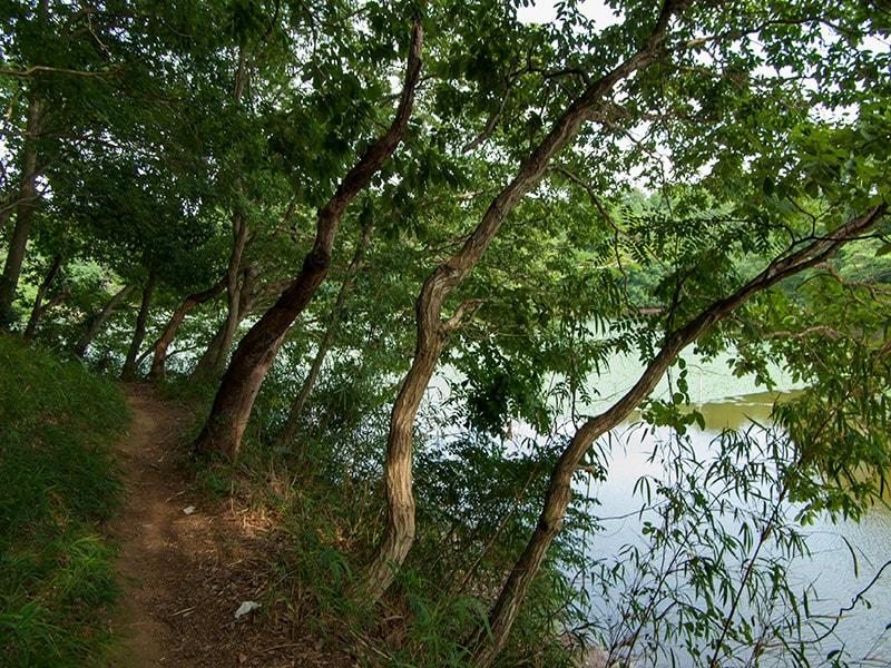 宍塚大池の散策コース