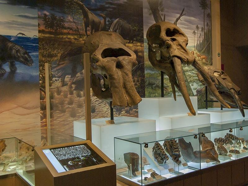 肉食獣の化石