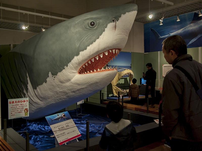 サメ展のメガロドン模型