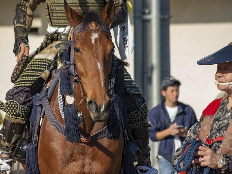騎馬隊の馬