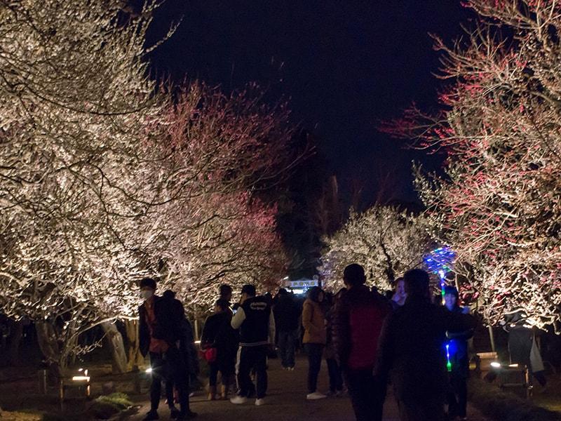 夜梅祭で賑わう偕楽園