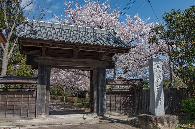 正門(桜)