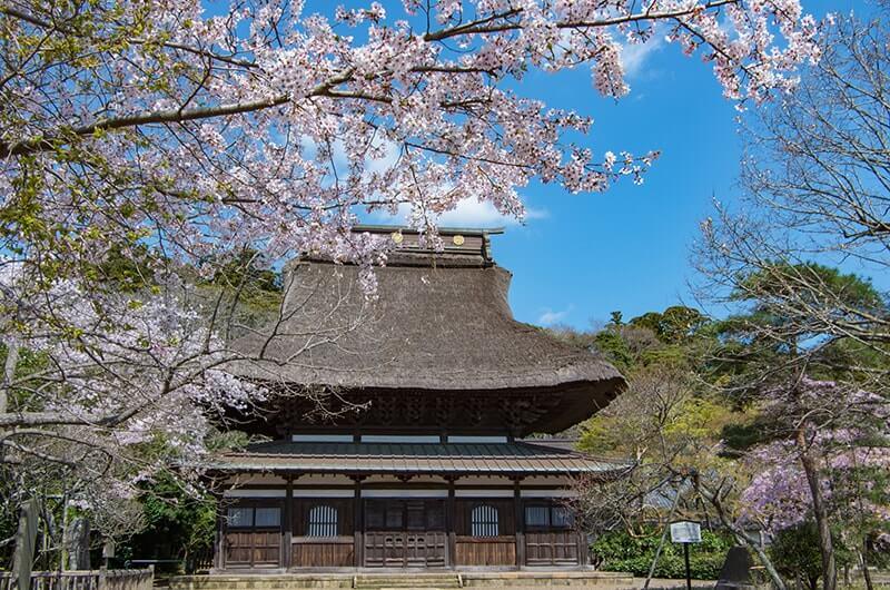 本堂(桜)