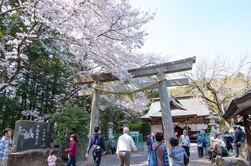 日枝神社と桜