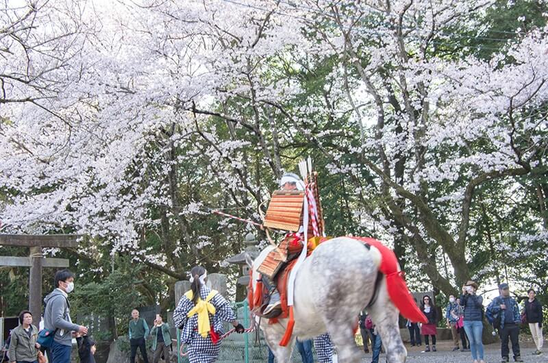 満開の桜の下で流鏑馬