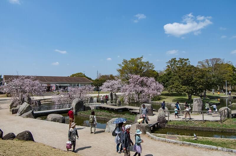 霞ヶ浦総合公園のしだれ桜