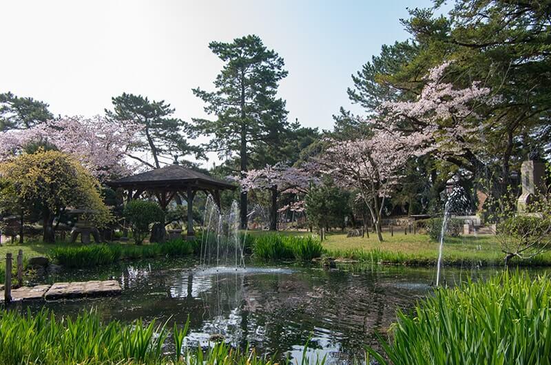 亀城公園の池と桜