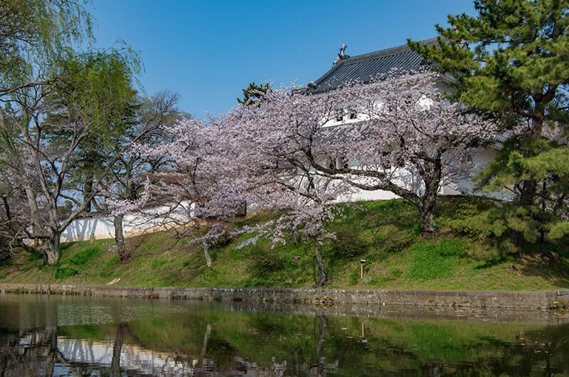 亀城公園の東櫓と桜