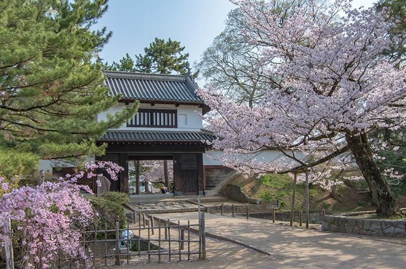 亀城公園の櫓門と桜