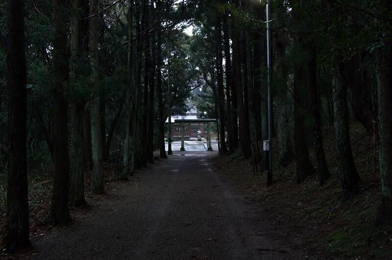 大宮神社へ続く並木