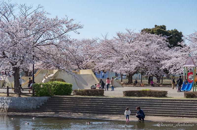 桜と水辺の乙戸沼公園
