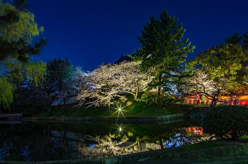亀城公園の夜桜