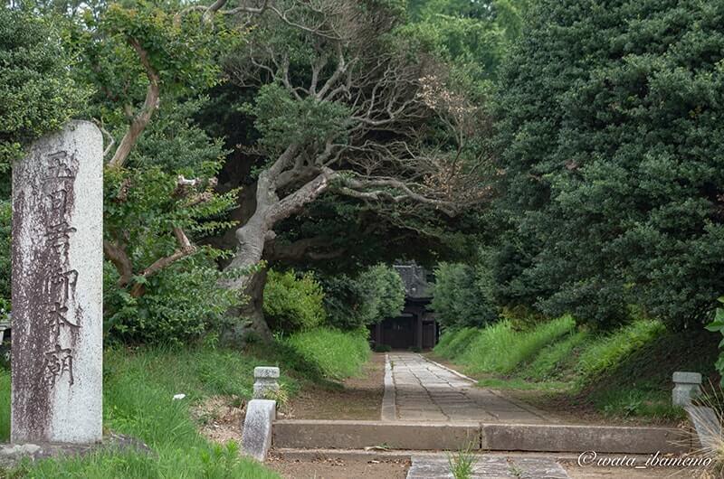 玉日姫廟入り口