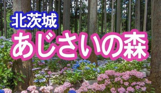日本一の品種!北茨城 あじさいの森はそば道場の敷地にあり!(北茨城市)