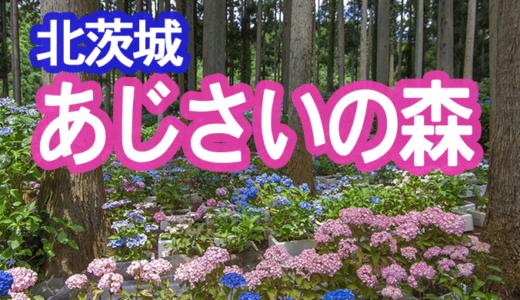 日本一のあじさいの森(北茨城市)