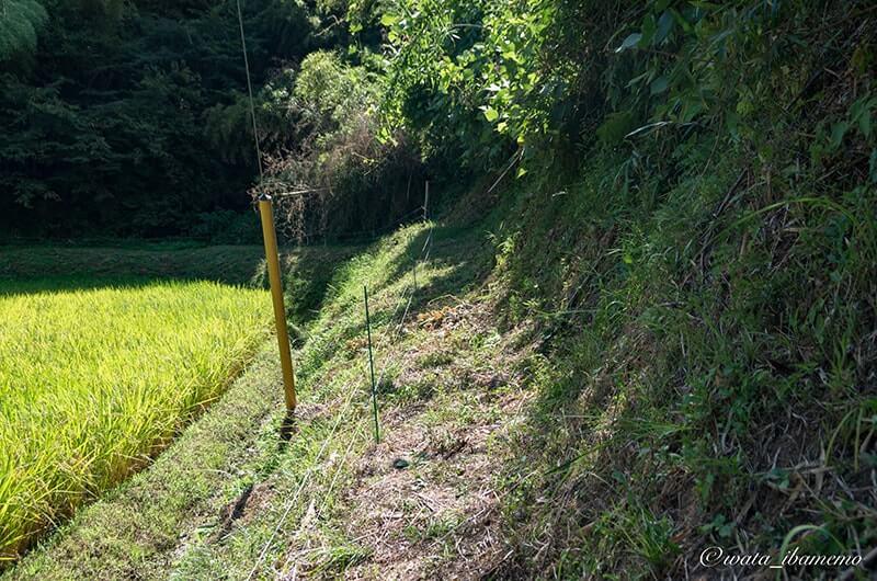 犬吠峠に続く険しい道
