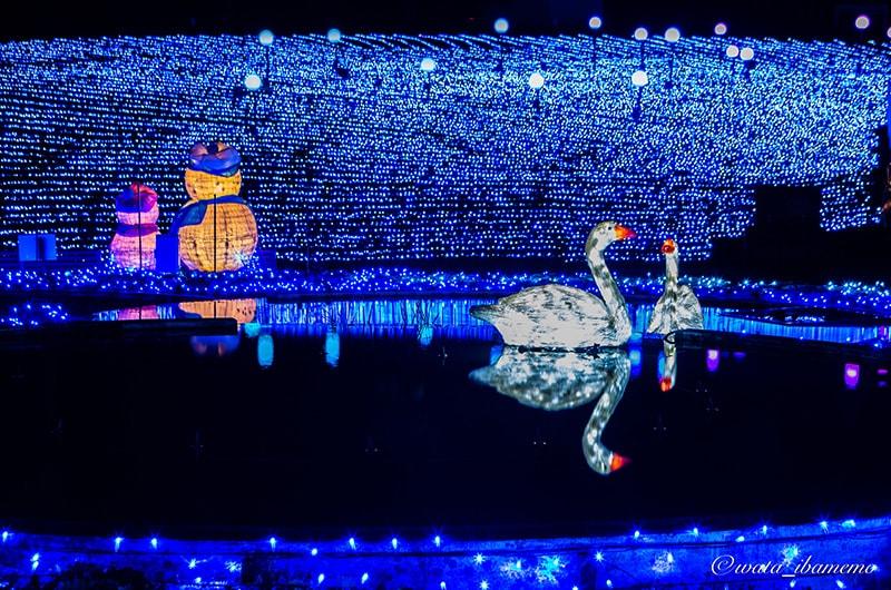 光の丘と白鳥の池