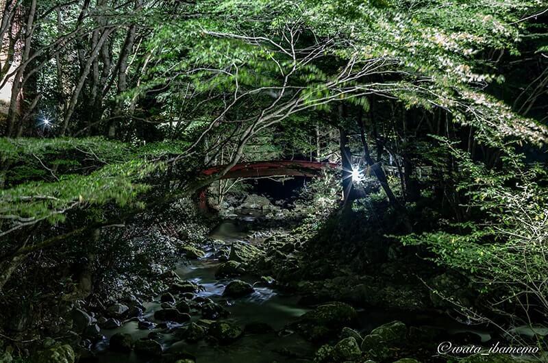 夜の花園川