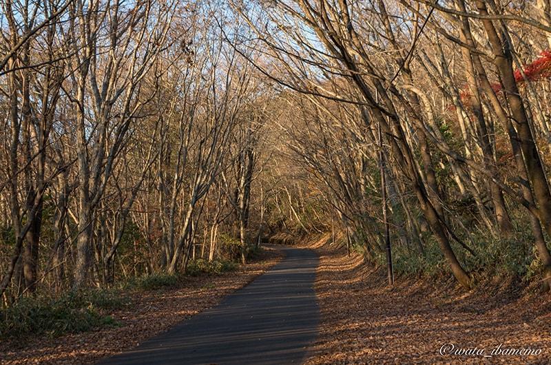 紅葉が終わった山道