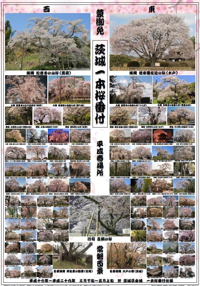 茨城一本桜番付
