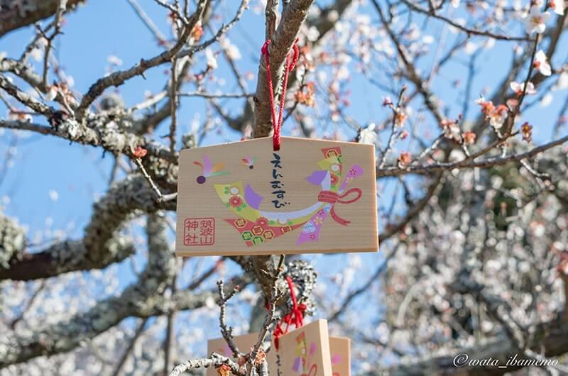 福来梅の木に提げる絵馬(300円)
