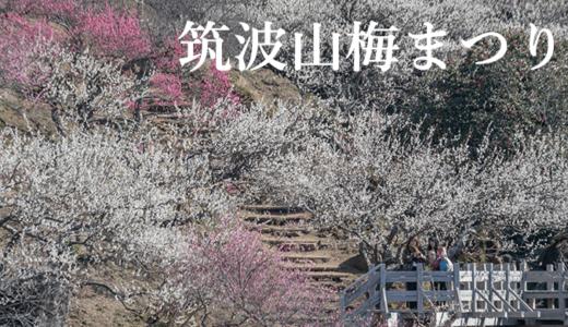 【2020年】筑波山梅まつり|見頃・駐車場・注意点(つくば市)