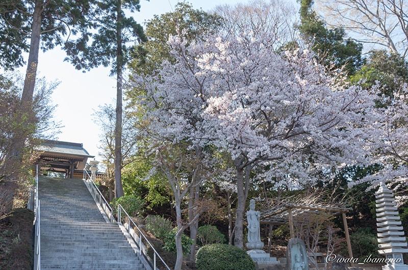 長福寺の石段