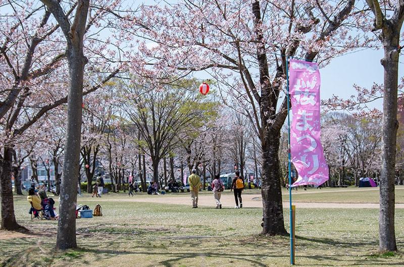神之池緑地の桜